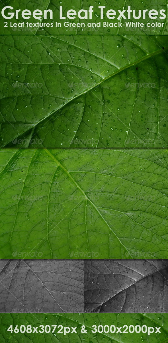 Green Leaf Textures - Nature Textures
