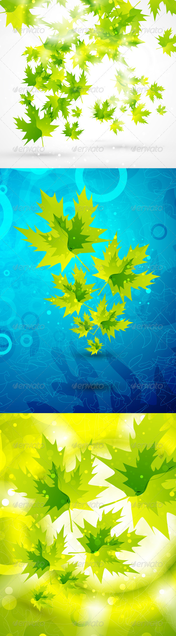 Maple Leaves Shiny Backgrounds - Flowers & Plants Nature