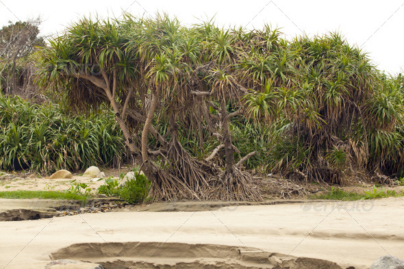 Plants on Beach - Stock Photo - Images
