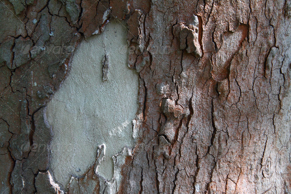 Tree bark texture - Stock Photo - Images
