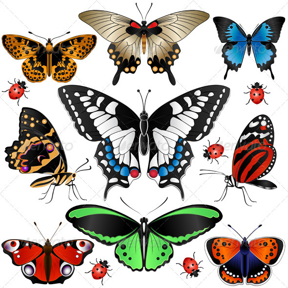 GraphicRiver Collection of Butterflies 2531462