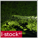 Green Pond - VideoHive Item for Sale