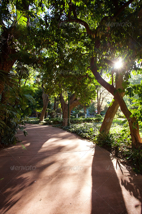 avenue of tropical trees and sun - Stock Photo - Images