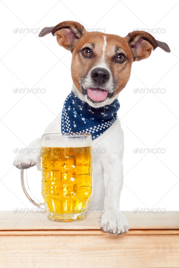 drunk dog with beer - Stock Photo - Images
