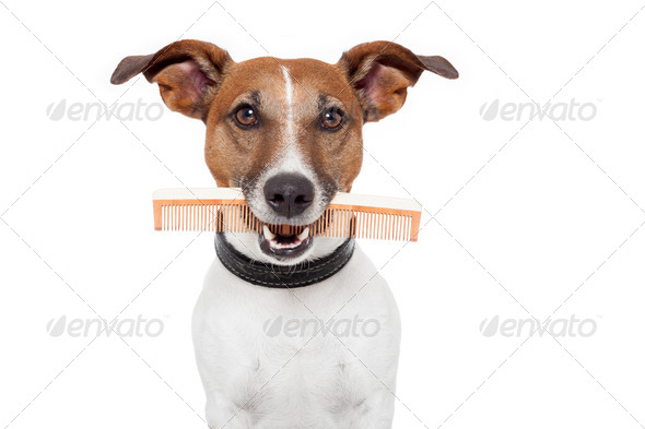 dog with comb - Stock Photo - Images