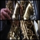 Saxophone 1 (4-Pack) - VideoHive Item for Sale