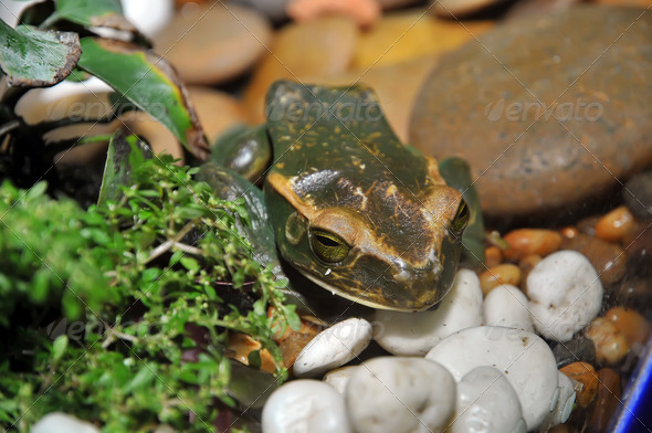 Rare frog - Stock Photo - Images