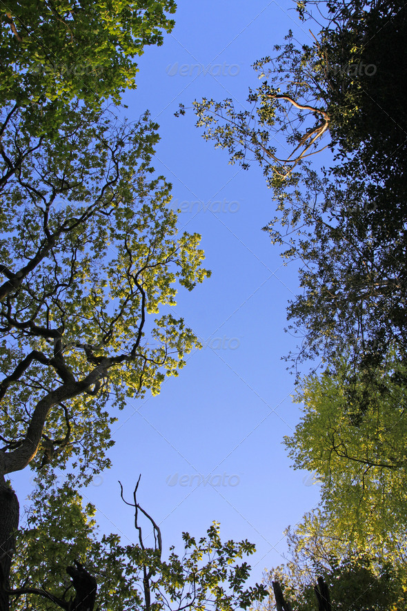Spring trees border and clear blue sky - Stock Photo - Images