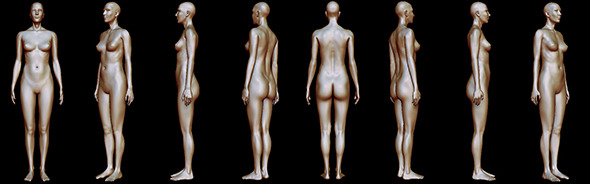 Woman body anatomy - 3DOcean Item for Sale