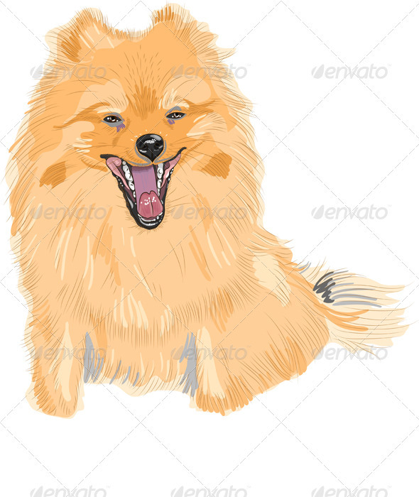 Dog German Toy Pomeranian Breed Smiles - Animals Characters