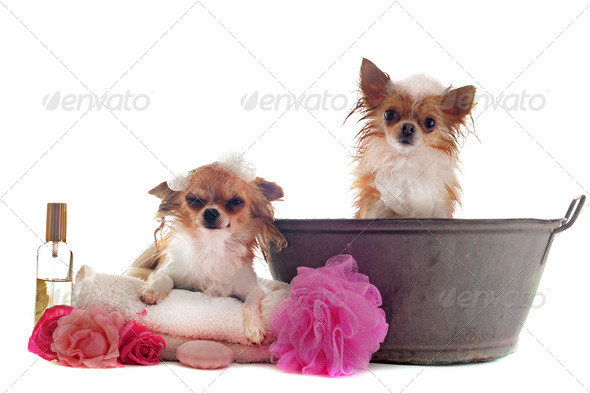 after bath - Stock Photo - Images