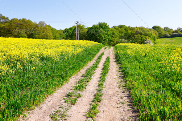 Agricultural crops - Stock Photo - Images