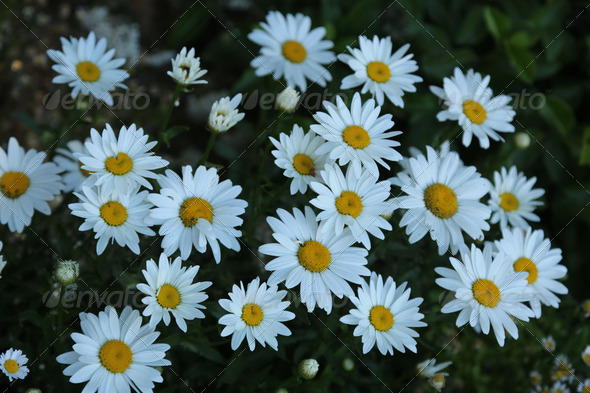 White flowers - Stock Photo - Images