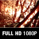 Woodland Sun Shining On Leaves Full HD - VideoHive Item for Sale
