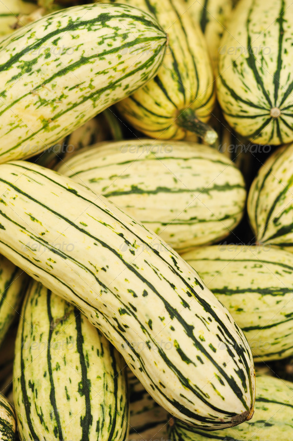 Delicata Squash - Stock Photo - Images