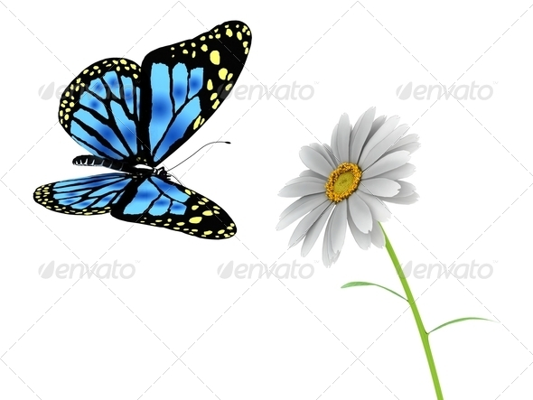 butterfly and daisy on white - Stock Photo - Images