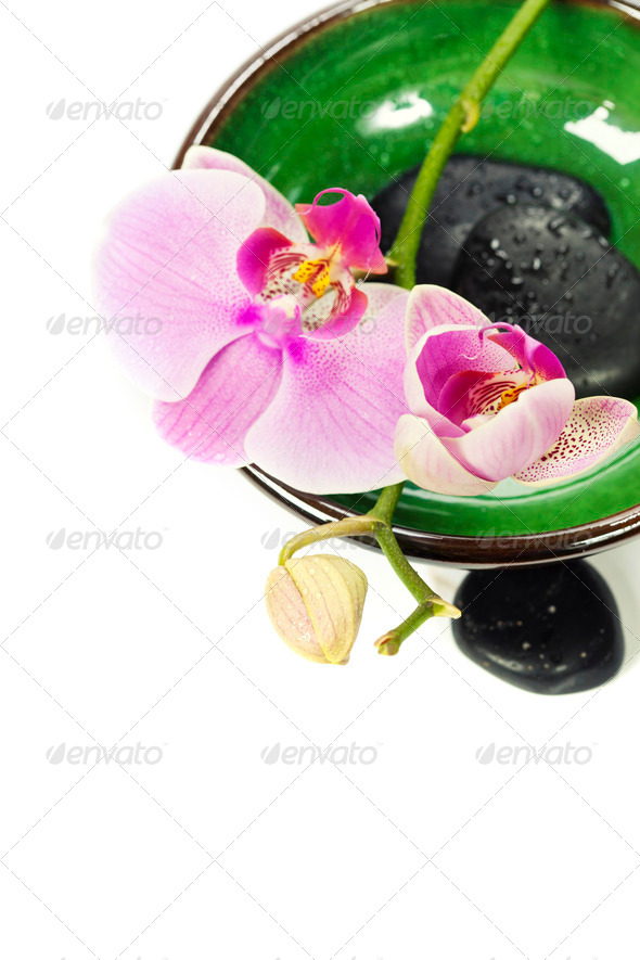 Orchid Spa Composition - Stock Photo - Images