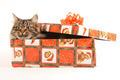 Funny cat in box on white background - PhotoDune Item for Sale