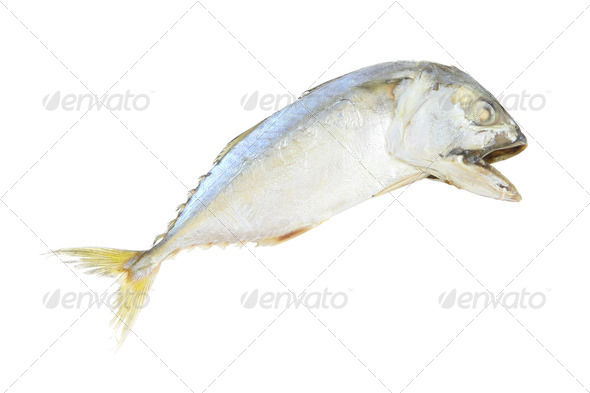 Mackerel steam fish on white background. - Stock Photo - Images