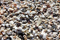 Sea Shells Background - PhotoDune Item for Sale