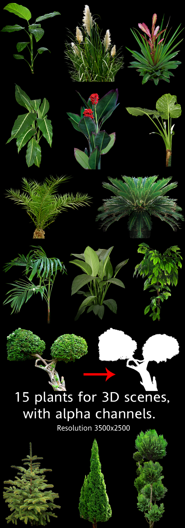 Plants for 3D scenes(part 2) - 3DOcean Item for Sale