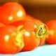 Sweet Cherry Tomato 1 - VideoHive Item for Sale