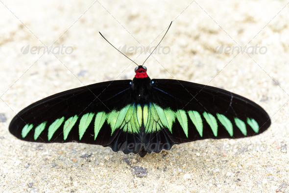 large tropical butterfly - Stock Photo - Images