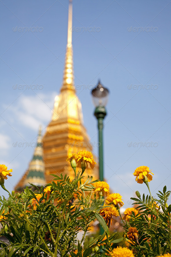 Flower with Golden Pagoda - Stock Photo - Images
