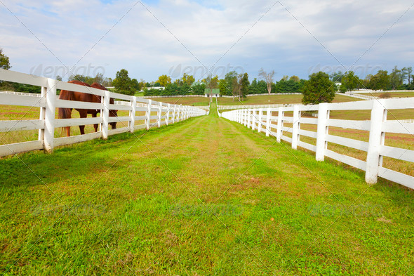 Horse farm - Stock Photo - Images