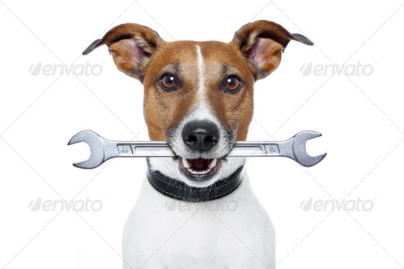 craftsman dog - Stock Photo - Images