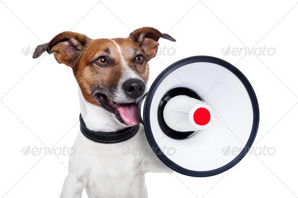 PhotoDune dog megaphone 2602466