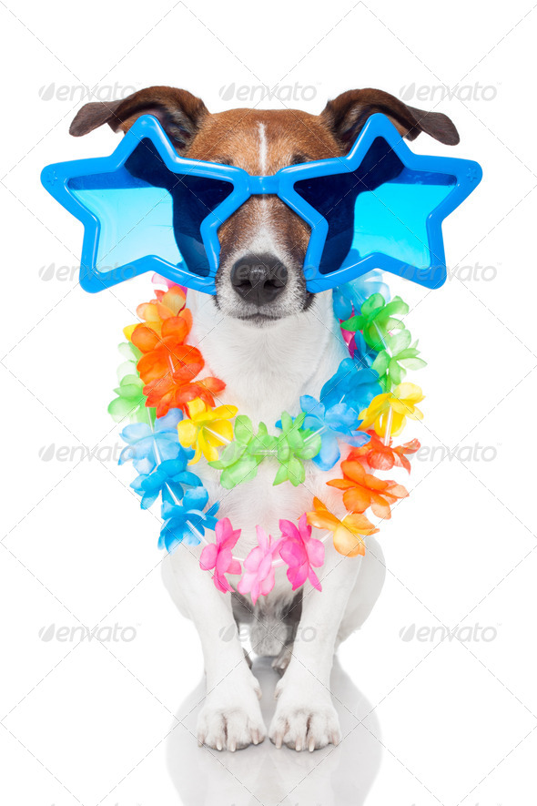 gay dog - Stock Photo - Images