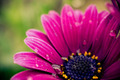 Purple Flower - PhotoDune Item for Sale