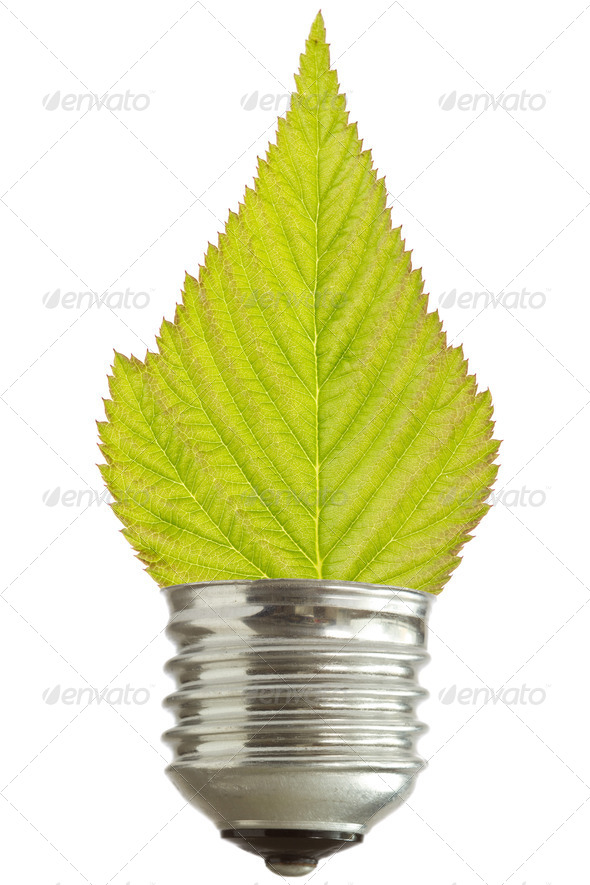 Light Bulb With Leaf - Stock Photo - Images