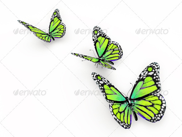 Butterfly isolated on white - Stock Photo - Images