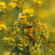 Summer Soldier Beetles - PhotoDune Item for Sale