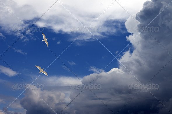 Two seagulls hover in sky - Stock Photo - Images