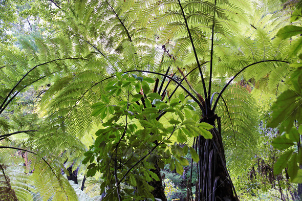 Fern trees in the Abel Tasman National Park - Stock Photo - Images
