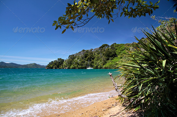 Beach  in the Marlborough Sounds - Stock Photo - Images
