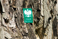 Old linden tree. Protected Natural Heritage in Poland - PhotoDune Item for Sale