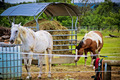 Horses eating and drinking - PhotoDune Item for Sale