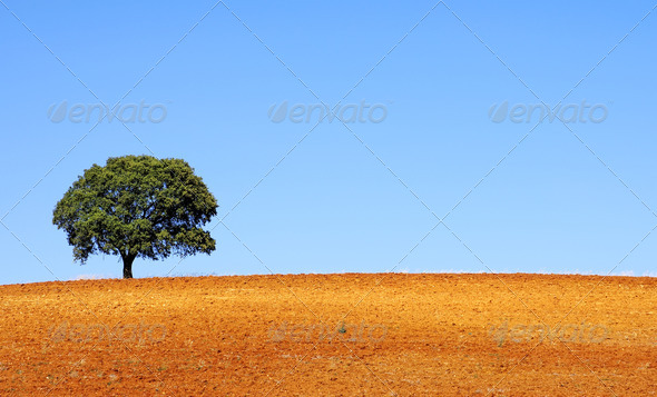 Lonely tree  - Stock Photo - Images