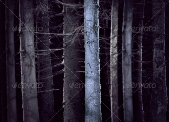 Spooky forest - Stock Photo - Images