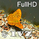 Orange Butterfly - VideoHive Item for Sale