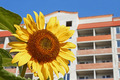 Urban sunflower - PhotoDune Item for Sale