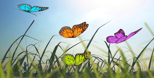 After Effects Project - VideoHive Butterfly Creator 2645252