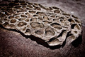 Patterned Rock Shaped after Erosion from the Sea - PhotoDune Item for Sale