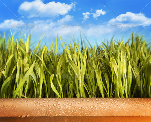 Freshly grown grass in large pot - Stock Photo - Images