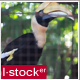 Exotic Bird In Zoo 1 - VideoHive Item for Sale