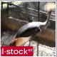 Exotic Bird In Zoo 2 - VideoHive Item for Sale